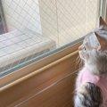 え…?本物?直立するマンチカン子猫さんが完全にぬいぐるみ♡