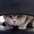 猫にドライヤーを上手にかける4つのコツと嫌う理由