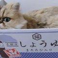 自慢の我が家を紹介します!お気に入りのハウスでくつろぐペルシャ猫
