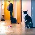 お留守番中の愛猫はどんな様子なの?実際に撮影をしてみた