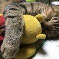 あなたの猫は何点?『猫の幸せ度』チェックテスト