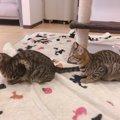 上越のおすすめ猫カフェ、「猫とお茶」を紹介!