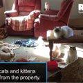 「劣悪」どころじゃない酷さ…子猫工場から救出された118匹のラグドール