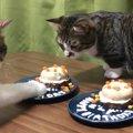 猫ちゃん達の誕生日!1歳になりました♪