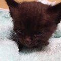 タイヤの中で子猫を発見!真っ黒な「あずき」は小さいけど、世渡り上手