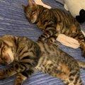 猫が『恐怖と怒り』の間で葛藤しているときの仕草や行動3つ
