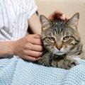 猫のことが好きならばやらない方が良いこと5つ