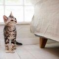 猫の低血糖症の症状や原因、その対処法について