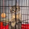 猫をケージ飼いする時の方法や注意点、商品の選び方