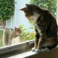 窓越しだけど時間をかけて仲良しになった「猫」と「リス」