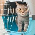不意の災害に備えよう!猫の『非常持ち出し袋』に入れるべきもの4つ