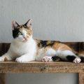 三毛猫の特徴とは  性格や三色の毛色の秘密