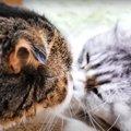 憧れの猫さんからの鼻チューにびっくりした猫さん♡