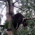 30メートル超えの木の上で立ち往生…強風に怯えた猫をレスキュー!