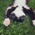 猫の肉球を解説!構造や役割、病気からケアの方法まで