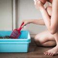 猫の臭いが部屋中に?清潔に保つ臭い対策!