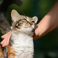 猫が撫でてほしい時にする6つの仕草