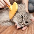 猫の「くし」お手入れで使う物の選び方やおすすめ商品