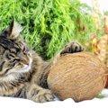 猫はココナッツを食べても大丈夫?注意したい事や効果