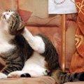 猫の耳の下がハゲてる...これって大丈夫?