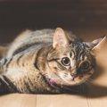 家猫にする事でのメリットやデメリット