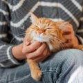 猫は自分の死期がわかる?お別れが近づくと見せる4つのサイン