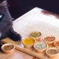 猫にカレーを与えるのが危険な理由と食べたときの対処法