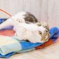 猫のおもちゃキャッチミーイフユーキャン2のおすすめのポイントと注意…
