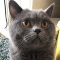 猫に見透かされてしまう『隠しごと』4つ