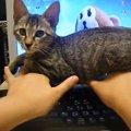 「ここは私の居場所ですが何か?」腕の上に陣取る猫様!
