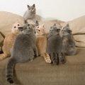 猫や犬を10頭以上飼う時は届出を!多頭飼育崩壊を防ぐ条例