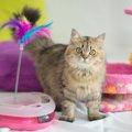 猫の遊び道具を手作りしよう!作り方とおもちゃの種類