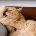 猫が執拗に自分の身体を舐める心理4つ