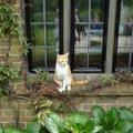 イギリス猫の旅♪英国チャーチル元首相が愛した猫『ジョック五世』に会…
