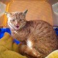 捨て猫がよくいる5つの場所と保護した猫に出会う方法