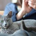 猫って優しい!意外と知らなかった性格やエピソード
