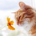 猫っていい匂い!香ばしい香りがする3つの理由