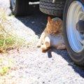 江の島の「猫スポット」はどこ?まったり過ごすねこちゃん達と触れ合…