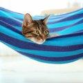 猫窓ハンモックの選び方や作り方、おすすめ商品まで
