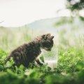 子猫にミルクを飲ませる方法。保護した直後はどうしたらいい?