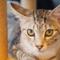 愛猫との暮らしに取り入れたい『アニマルウェルフェア』5つの自由