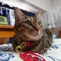猫を『完全室内飼い』するべき理由5選