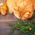 猫は栗を食べれる?与え方の注意