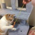 15分で完成!猫さん夢中のフェルトモール