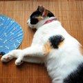猫に食べさせてはいけない『夏野菜』5つ