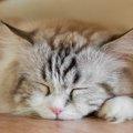 猫の部屋作り入門!飼う前にやるべき安全対策