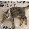 緊急時のため「猫が居ます!」を知らせるレスキューステッカーを作り…
