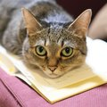 愛猫をプロに撮影してもらいたい!依頼方法や金額感は?