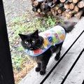 雨の日のお散歩も楽しい♡猫用の雨カッパを手作りしてみました