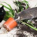 【あるある】猫にされて困ること3つ【なぜ今】